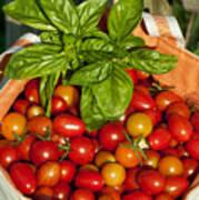 Cherry Tomato Harvest Art Print
