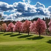 Cherry Tree Bloom Color Art Print