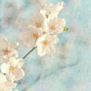 Cherry Tree Blossom Art Print