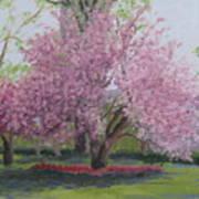 Cherry Tree Madison Square Park Art Print