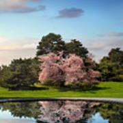 Cherry Tree Reflections Art Print