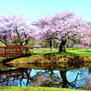 Cherry Trees In The Park Art Print