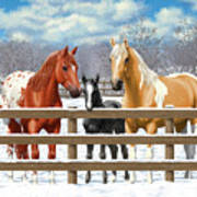 Chestnut Appaloosa Palomino Pinto Black Foal Horses In Snow Print by Crista Forest
