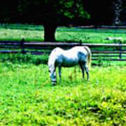 Chestnut Hill Horse Art Print
