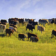 Cheyenne Cattle Roundup Art Print