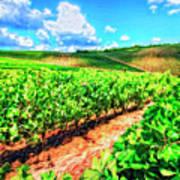 Chianti Vineyard In Tuscany Art Print