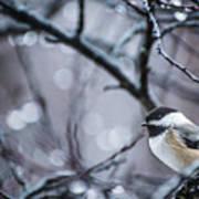Chickadee Rain Art Print
