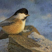 Chickadee Winter Perch Art Print