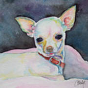 Chihauhau Puppy Art Print