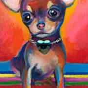 Chihuahua Dog Portrait Print by Svetlana Novikova