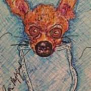 Chihuahua In A Pocket Art Print