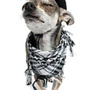 Chihuahua Wearing A Scarf And A Cowboy Hat Art Print