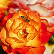 Chihuly Rose With Bee Art Print