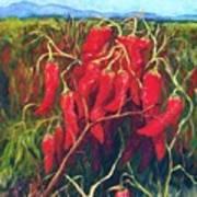 Chile Field Art Print