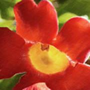 Chinese Trumpet Flower In La Mesa California Art Print