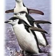 Chinstrap Penguins 1 Art Print