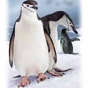 Chinstrap Penguins 2 Art Print