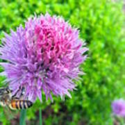 Chive And Bee Art Print