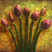 Chives Buds Art Print