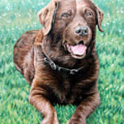 Choco Labrador Art Print
