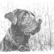Chocolate Labrador In Woods Drawing Art Print