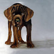 Chocolate Labrador Puppy Print by Dick Larsen
