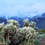 Cholla Cactus And Superstition Mountains Art Print