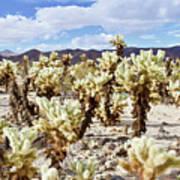 Cholla Desert Garden Art Print