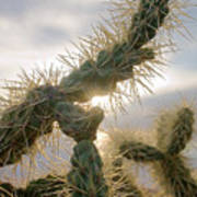 Cholla, Organ Pipe National Monument, Az  January 2015 Art Print