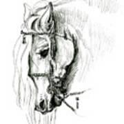 Chomping At Bit - Sketch1 Art Print