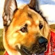 Chow Shepherd Mix Art Print