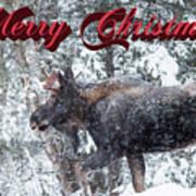 Christmas Bull Moose Art Print