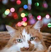 Christmas Kitty In A Basket Art Print