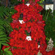 Christmas Poinsettia Display 002 Art Print