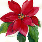 Christmas Poinsettia Art Print