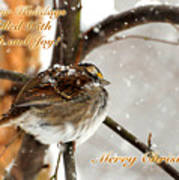 Christmas Sparrow - Christmas Card Art Print