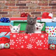 Christmas With Kittens Art Print