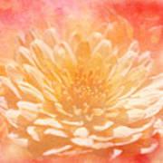 Chrysanthemum Obscured Art Print