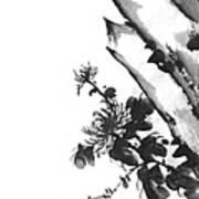 Chrysanthemum Stone 2 Art Print