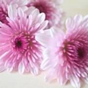 Chrysanthemums #009 Art Print