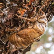 Cicada Exoskeleton Side Art Print