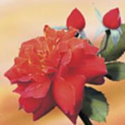 Cinnamon Roses Art Print