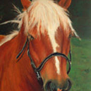 Cinnamon The Horse Art Print
