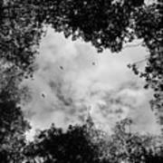 Circling Overhead Art Print