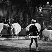 Circus: Polar Bears Art Print
