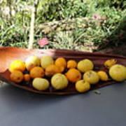 Citrus Fruits Art Print