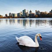 City Swan Art Print