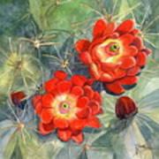 Claret Cup Cactus Art Print