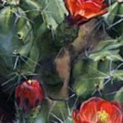 Claret Up Cactus Art Print