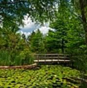 Clark Gardens Botanical Park Art Print